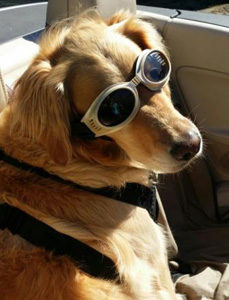 "Porter Wearing His ""Doggles"""